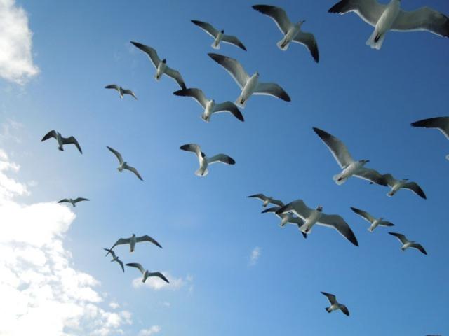 Birds sm